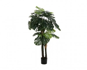Filodendron fi90x175